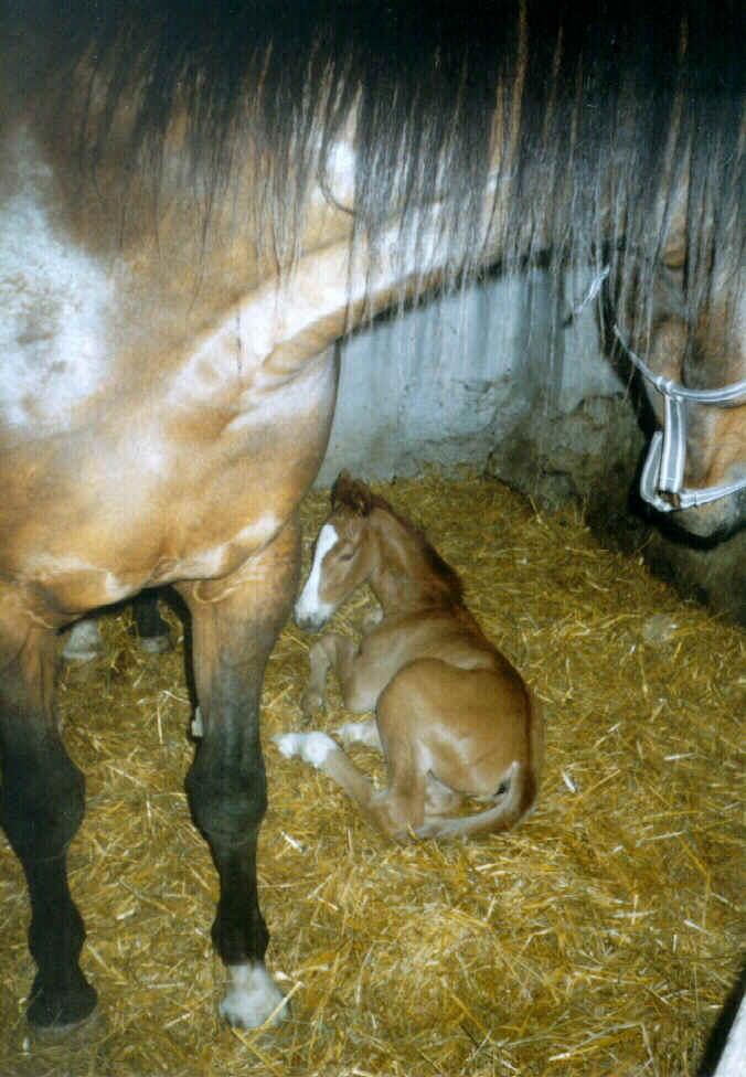 Po narození