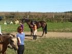 Jak dostat malé dítě na velkého koně