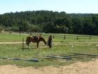 na trati je kůň, ale kde je jezdec?